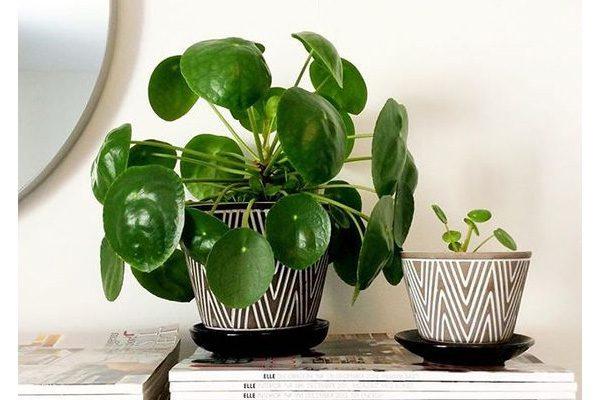 Leuke originele planten